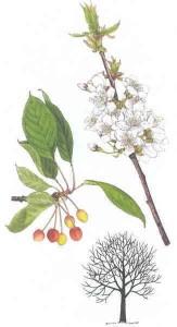 Třísložkové karty… Stromy, květiny, bylinky…