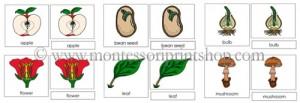 Třísložkové karty v Montessori